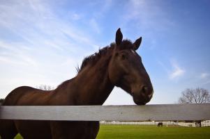 Jízdy na koních v Hipodromu