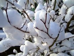 Spadlé stromy pod náporem sněhu