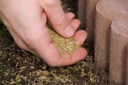 Připravte trávník na zimu. Jak správně na podzimní vertikutaci?